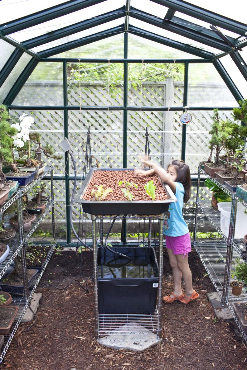 Backyard Aquaponics 187 Freestylefarm